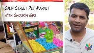 Galif Street Pet Market | Shyambazaar | Kolkata | Travel | Aquarium | Pets