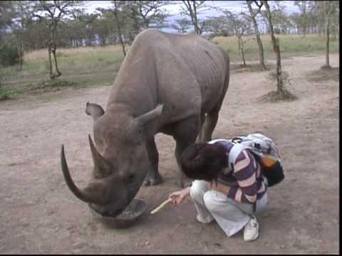 Rhino Morani Kenya 触れることの出来るサイ(ケニア)