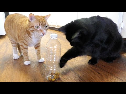 猫を飼っている人は確実に知っておきたい5つのテクニックと猫との遊び方。