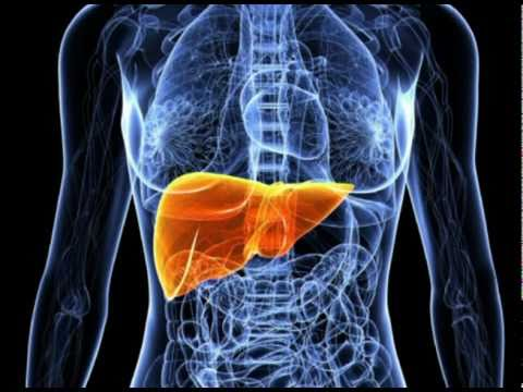 Liver Disease Symptoms - Learning to recognize and understand Liver Disease Symptoms