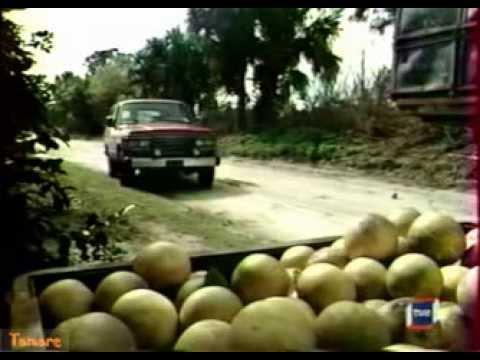 Online Telenovela Gabriela   Trailer de la nueva telenovela brasileña