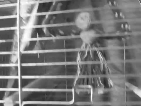Пионерлагерь Пыльная Радуга (ППР) - Пионерлагерь Пыльная Радуга (ППР) - Лузер