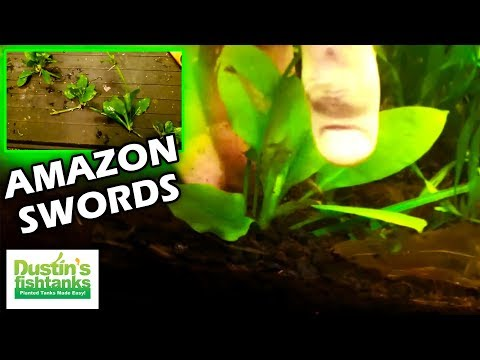 Как сажать аквариумные растения без корней 24