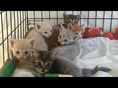 保護した猫家族の母猫の様子がおかしい…。しばらくして姿を消してしまって…