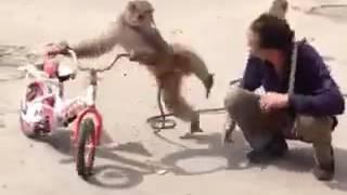 Monkey man comedy, WhatsApp videos, WhatsApp comedy, comedy,