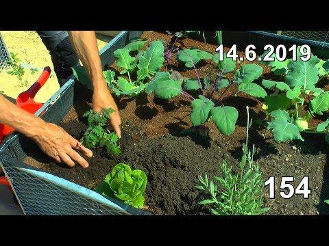 Ab In Den Garten Gelbe Tomaten Einpflanzen Gartenrundgang Säule Schneiden