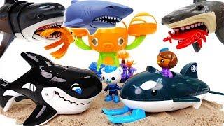 Shark Attack~! Octonauts GUP-O Rescue Sea Creatures With Orca - ToyMart TV