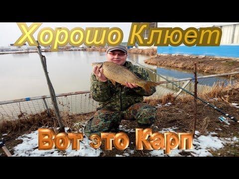 Зимняя ловля Карповых Возможна.