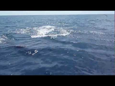 False Killer Whales watching! Amazing Sport fishing tour Costa Rica Manuel Antonio 18-01- 1.mov