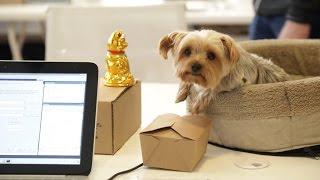 Dogs Rule At BarkBox HQ | TC Cribs