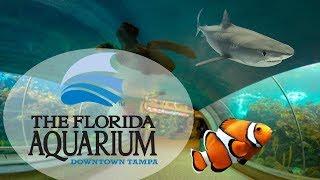 The Florida Aquarium Downtown Tampa