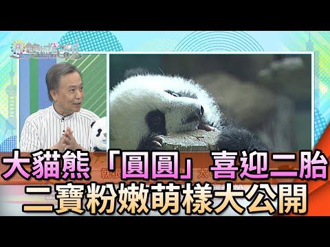 雙城記-20200713 大貓熊「圓圓」喜迎二胎 二寶粉嫩萌樣大公開