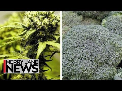 Smoke Your Greens: How Weed Dealers Duped Customers Into Buying Broccoli   MERRY JANE News