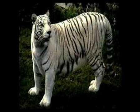 Los 10 animales más peligrosos del mundo. - VXV: Videos x Vos.