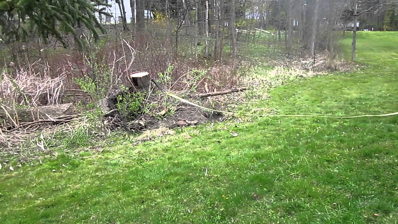 how to kill a tree stump with diesel