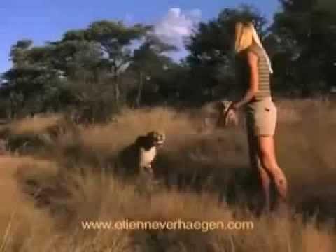 Girl Eaten Alive by Lions and Cheetahs!!   REAL FOOTAGE