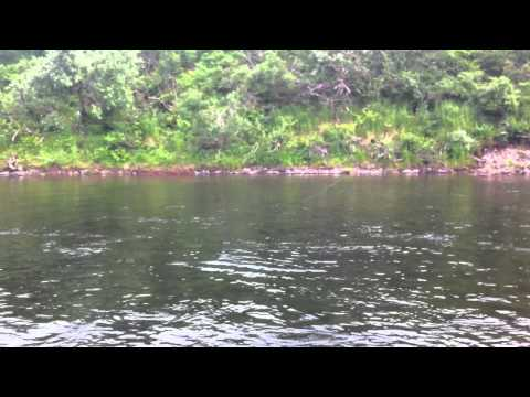 Fly fishing the Goodnews river 2012