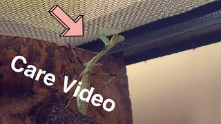 Praying Mantis Care Video!