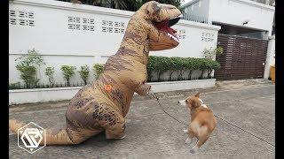 T-Rex พาขุนแผนเดินเล่น