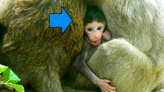 Wow! New Born Baby Can Move and Fresh | It is Great To See Baby Zena Better
