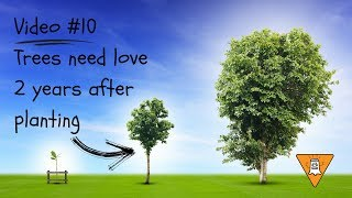 10 - Trees Need Love in the Second Year They're Installed