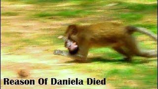 RIP! Reason Of Poor Daniela Dead By Santra Who Attacked On Baby Daniela Monkey