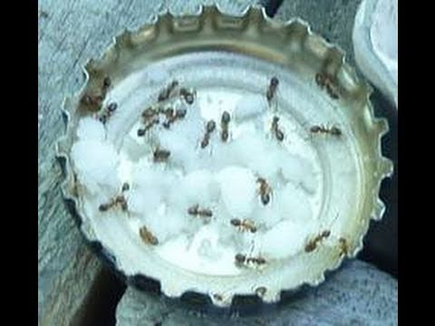 all natural ant control using borax youtube. Black Bedroom Furniture Sets. Home Design Ideas