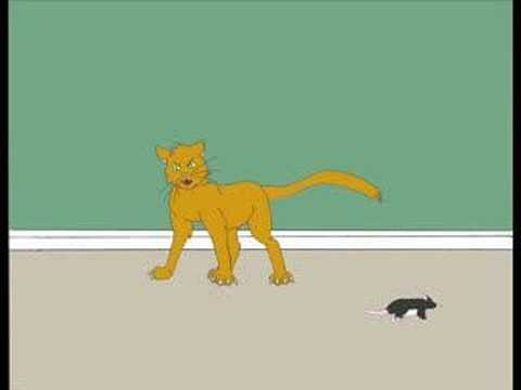 Cat and Mouse Video