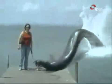 Big Snake Eating Dog