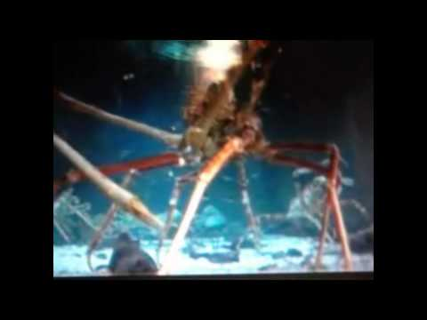Big monster crab (extreme)
