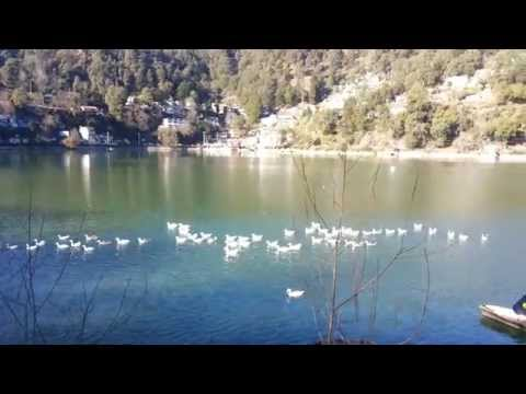 Nainital Nainital Tour Nainital Tourism Ducks On Nainital Lake