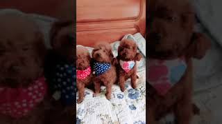 Look at these cute and funny puppies dogs 1657