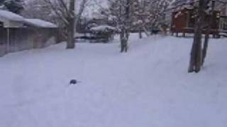 More snow wrestling