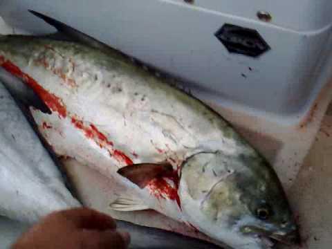 Pesca Alla Traina Pesca a Traina Alex Cattura