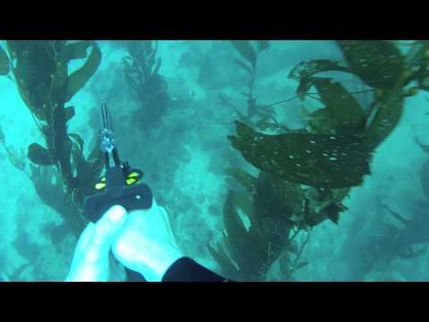 Catalina Island Spearfishing