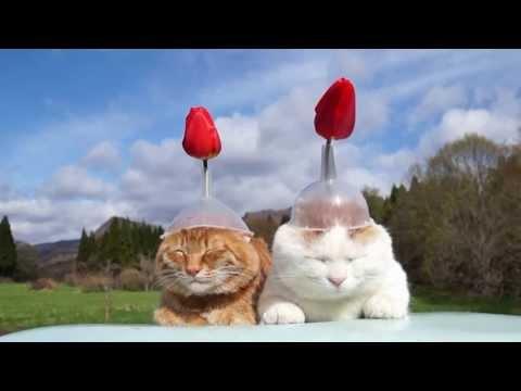 頭に薔薇を刺してる猫ズがなんかかわいい