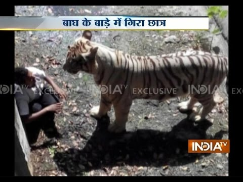 Exclusive Footage: Youth killed by tiger in Delhi Zoo