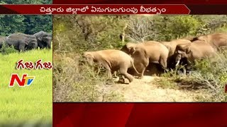 Elephant Gang Destroys Crop in Chittoor District