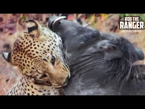 Leopard Vs Warthog: Incredible Battle for Survival!