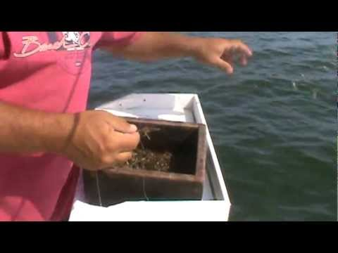 Hi Flier Charters Stripers on Live Grass Shrimp NJ Part 1