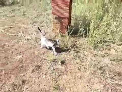 Πάλη ανάμεσα στην γάτα και οχια.