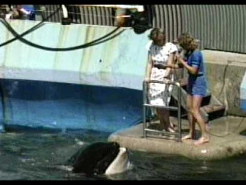 Man Kissing Whale Killer Whale Kiss