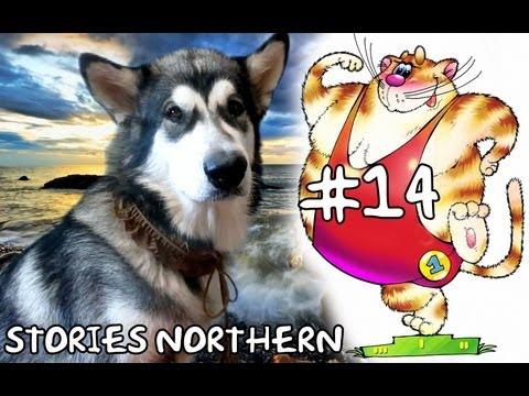 олимпийский кот - Stories Northern 14