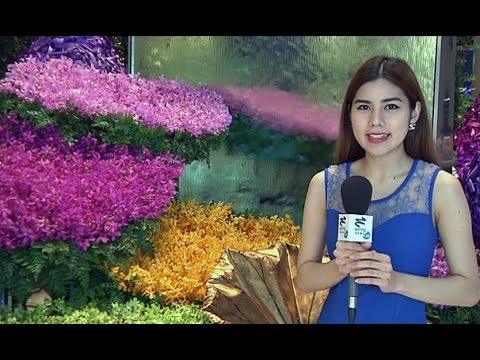 Siam Paragon Bangkok Royal Orchid Paradise2014 มหัศจรรย์กล้วยไม้ – Springnews