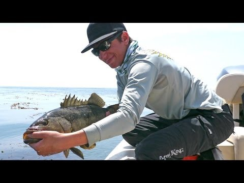 Big Calico Bass Chewing at Catalina Island on Phil Friedman Outdoors