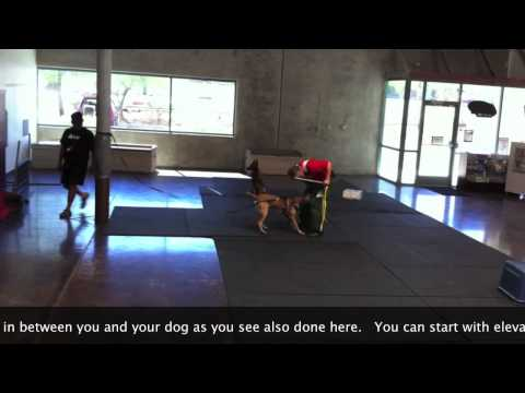images of Dog Better In This Training Video For Sport Dogs And Police