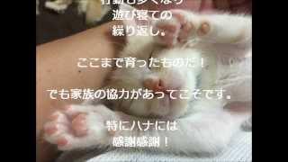 Qoo(くぅ) 生後3~5日の子猫から1歳までの記録