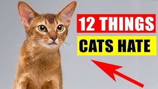 12 Things Cats Hate the Most