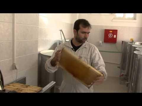 Μελισσοκομία: Ένας κλάδος με πολλές προοπτικές