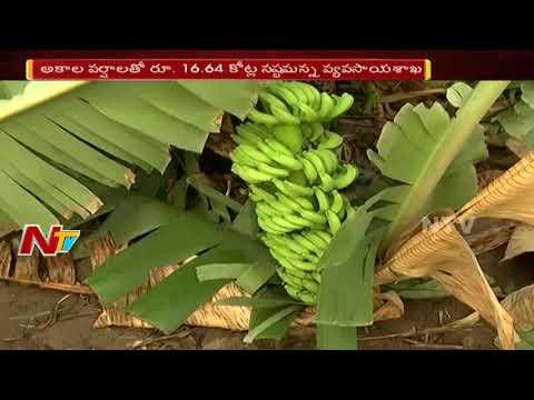 Unseasonal Rain Destroys Crop In AP || Farmers Get Huge Loss || NTV